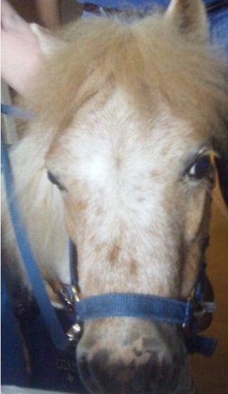 Hospital_Horse