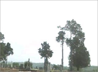 Oxford Alabama Cemetery