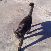 Brindle cat telling us good bye