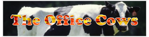 The Office Cows by BN Heard (c)