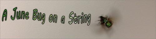 A June Bug on a String by BN Heard (c)