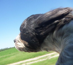A dog enjoying the ride