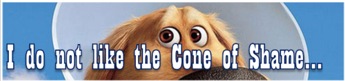 I do not like the Cone of Shame by BN Heard (c)