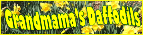 Grandmama's Daffodils by BN Heard (c)