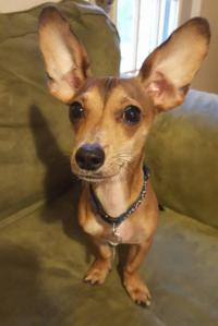 "Foster Pup ""Radar"""