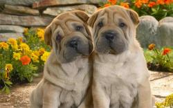 Double Dog Dare 2