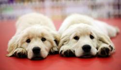 Double Dog Dare 1